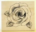迫力ある薔薇
