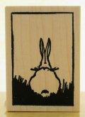 ウサギの後ろ姿